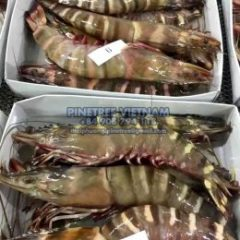 Frozen Blacktiger Prawn -Shrimp Whole Sale