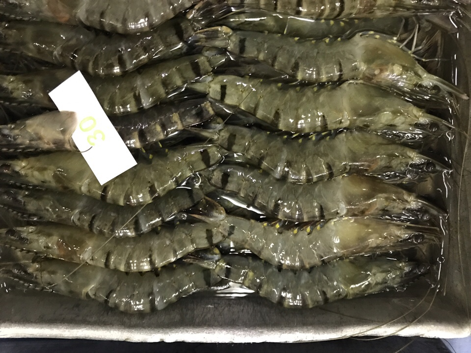 Black tiger shrimp in the box