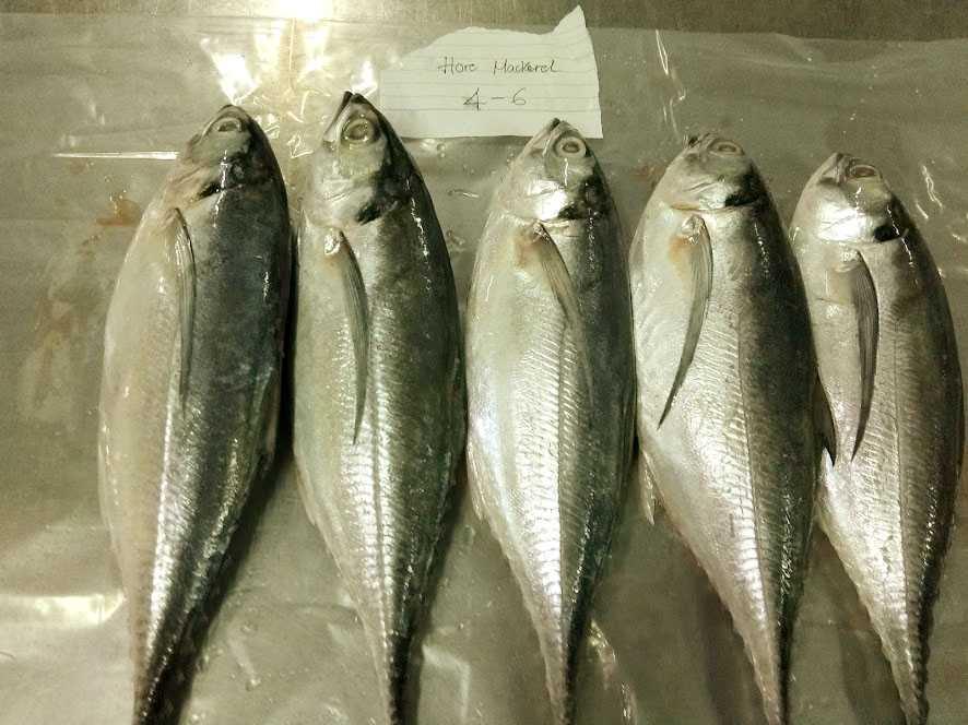 horse mackerel 4-6