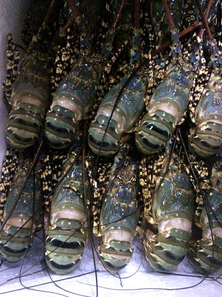 Sorting Lobster