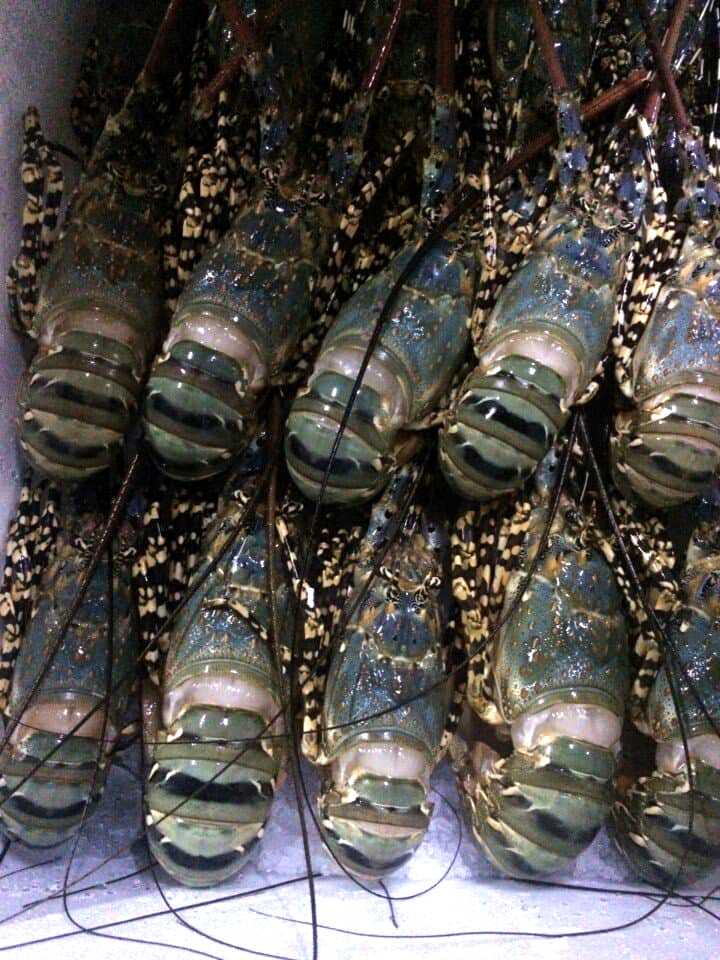 Sorting Lobster