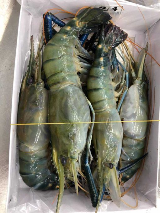 live frozen scampi packing big size