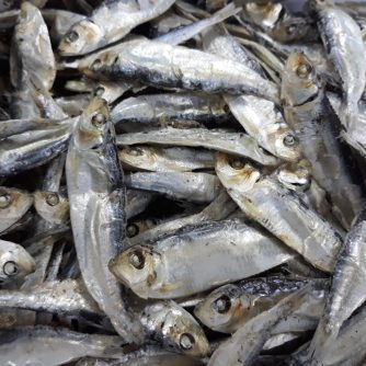 dried herring 8