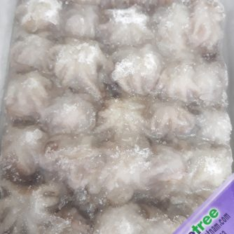 whole sale baby octopus, origin from vietnam