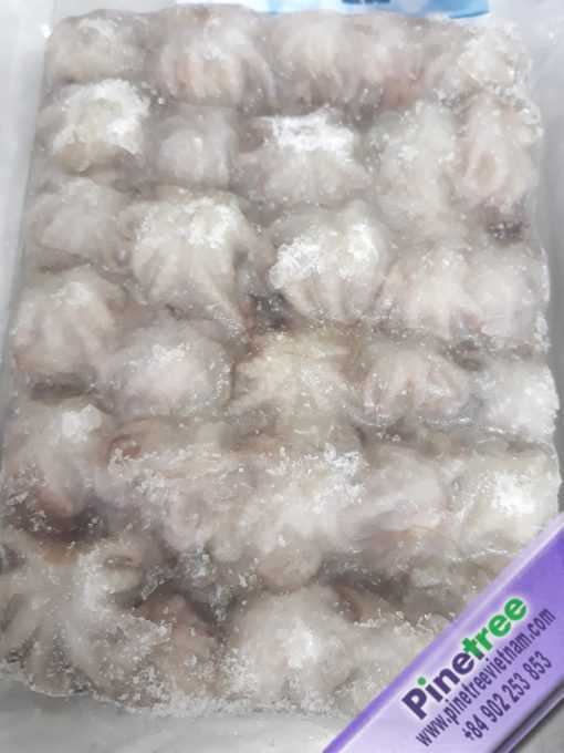 baby octopus, frozen octopus, whole sale, cheap price