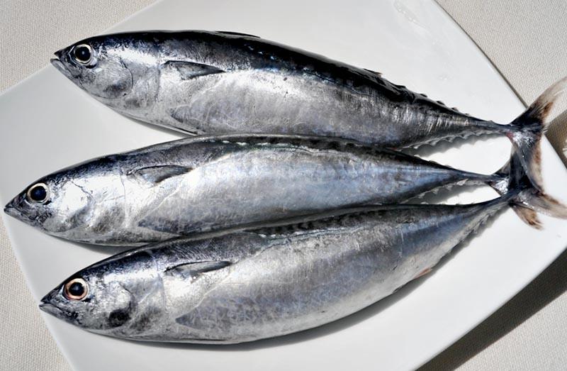 frozen bullet tuna