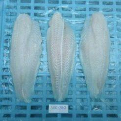 Pangasius Fillet 300-500