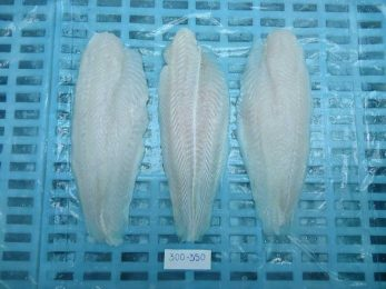 Vietnam Pangasius export industry has many competitors