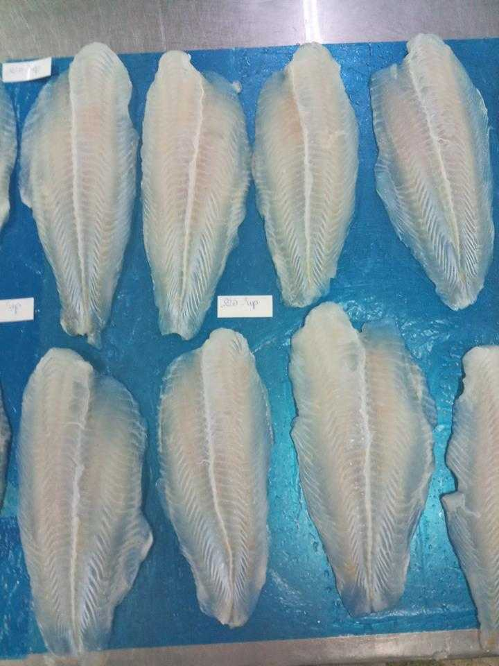 Pangasius Fillet 220 up