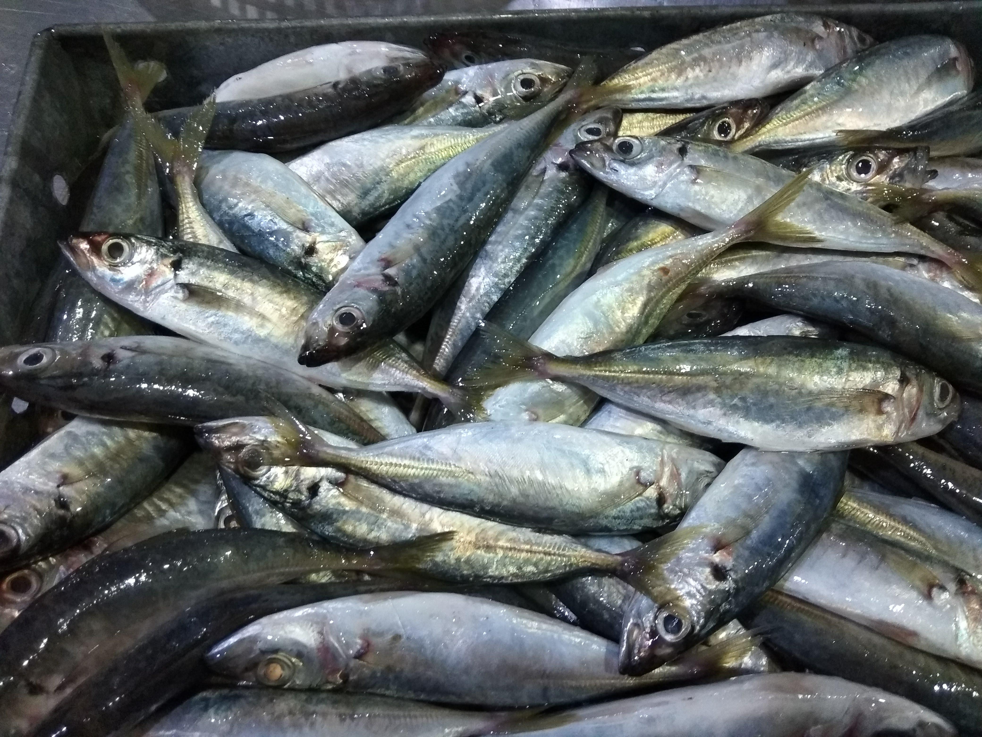 pinetreevietnam.com export company frozen seafood product
