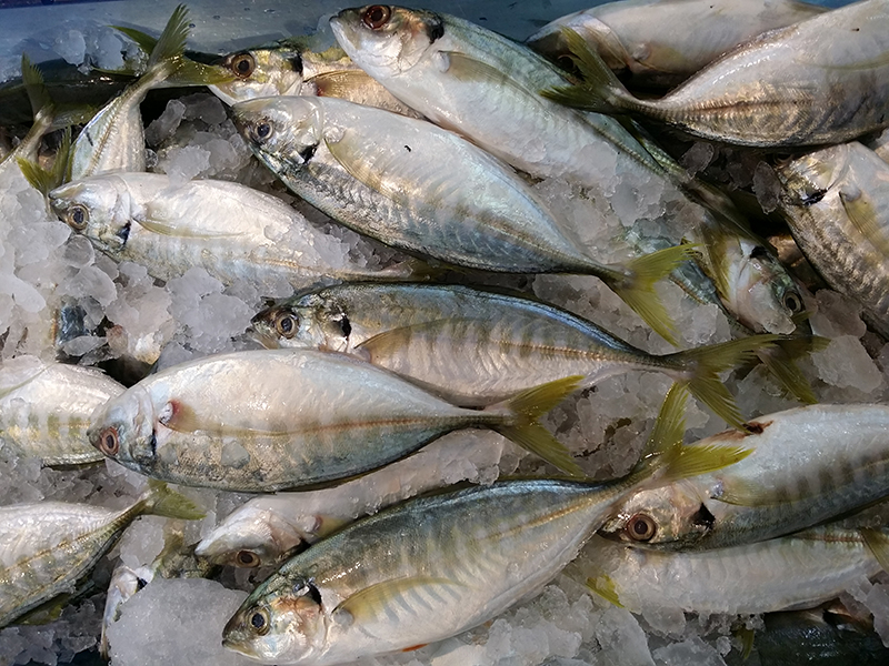 Yellow Tail Scad WR fish frozen product pinetreevietnam