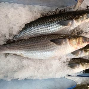 Grey Mullet Frozen