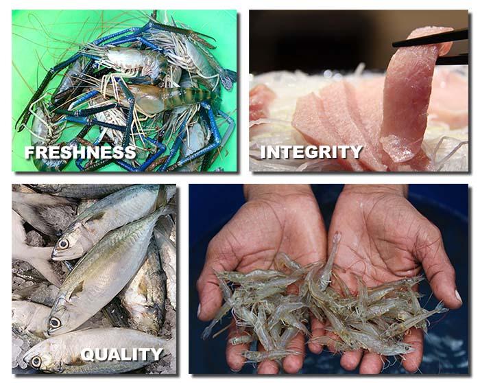 Freshness Seafood