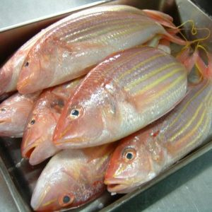 Golden Threadfin Bream