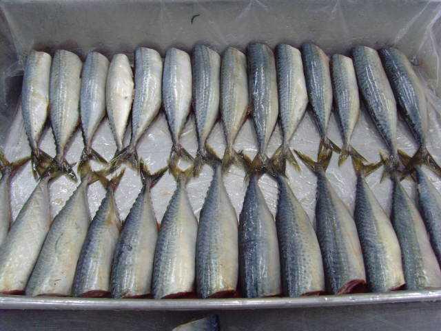 sardine hgt 1
