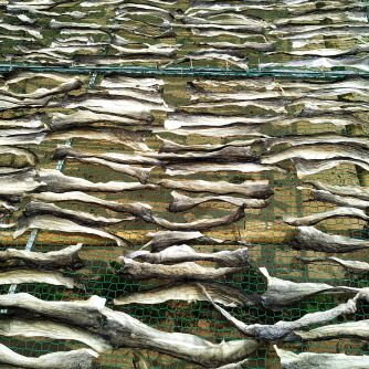 hight quality dried pangasius product from vietnam