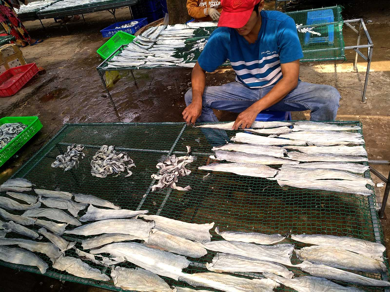 drying basa skin at the factory 01