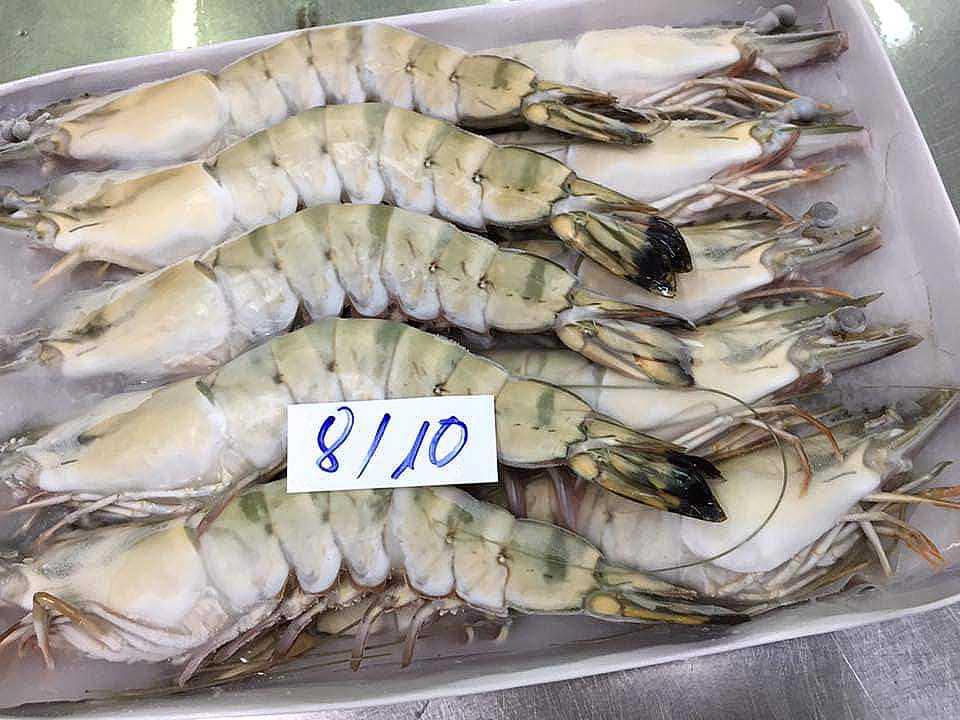 frozen black tiger shrimp 8-10