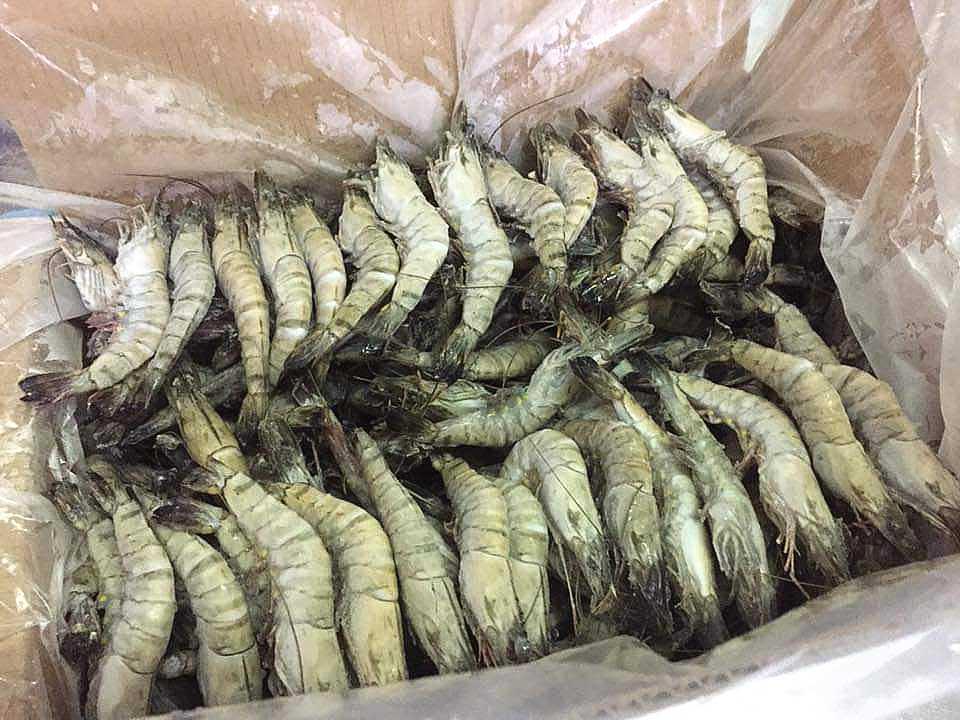 packaging frozen black tiger shrimp